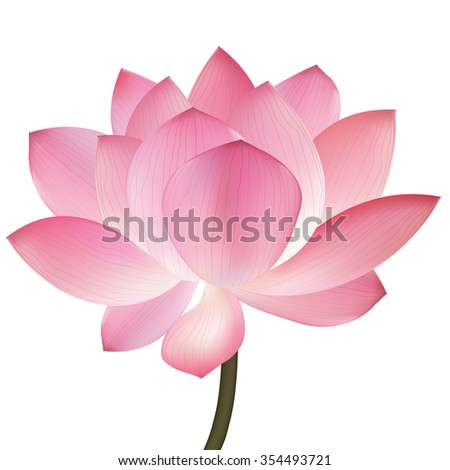 Beautiful pink lotus flower, isolated on white background. Stylish floral spring wallpaper. Greeting or invitation card. Vector illustration Eps-10 - stock vector