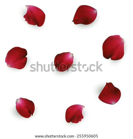 Beautiful red rose petals. Vector Illustration