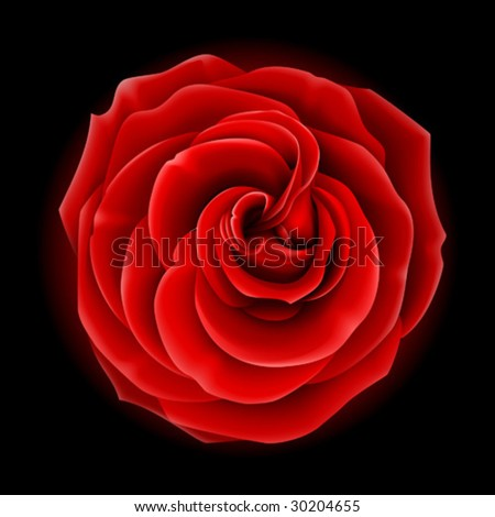 Beautiful red rose, symbol of love and passion (made using gradient meshes) - stock vector