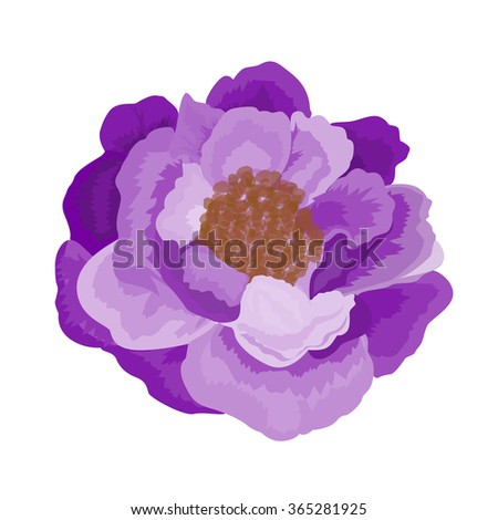 Beautiful  rose flower isolated on white background. Vector illustration. EPS 10 - stock vector