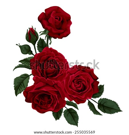 Beautiful rose isolated on white. Red rose. Perfect for background greeting cards and invitations of the wedding, birthday, Valentine's Day, Mother's Day. - stock vector