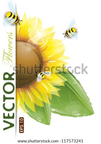 Beautiful sunflowers and green leaves, vector illustration, eps-10 - stock vector