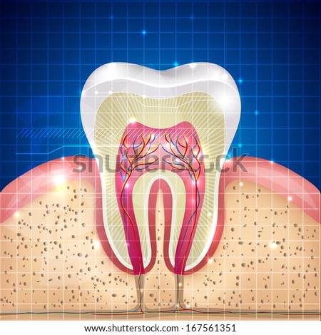 Beautiful tooth cross section illustration, deep blue background and sparkling lights around.