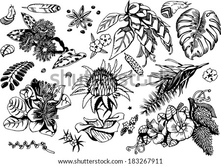 Beautiful Tropical Plants Collection (black&white Vector EPS10 Doodles) - stock vector