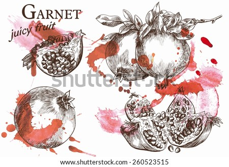 Beautiful vector illustration of pomegranate on the branch, which very juicy and located on the watercolor background - stock vector