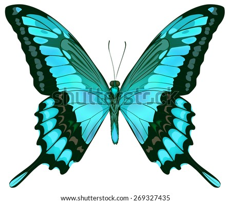 Beautiful vector isolated green blue butterfly - stock vector
