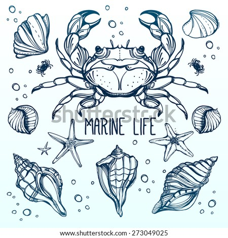 Beautiful vintage hand drawn linear marine life set. Shells, octopus,fish, crab, starfish. Design for summer beach, decorations. Isolated on blue and white vector illustration. Sea for menu, textiles.