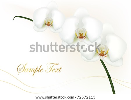 Beautiful white orchid isolated on white. Vector. - stock vector