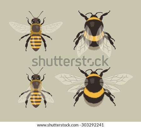 Bee and Bumblebee - stock vector