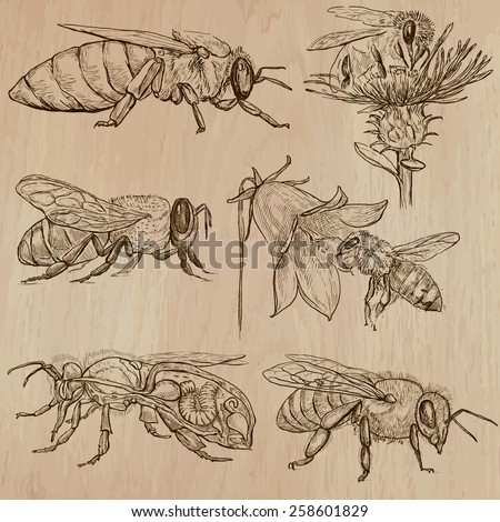 BEES, BEEKEEPING and HONEY. Collection of an hand drawn vector illustrations (pack no.3). Each drawing comprises of three or four layers of lines, the colored background is isolated. - stock vector
