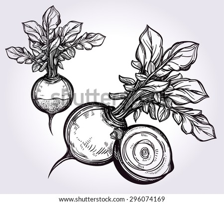 Beet vegetables set vintage linear style. Isolated vector illustration. Hand drawn retro symbols of assorted veges. Perfect menu, garden farm, shop, market, organic, vegetarian/vegan foods template. - stock vector