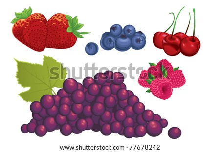 Berries Cherries and Grapes - stock vector