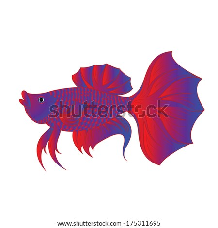 Betta fish or Siamese fighting fish isolated on white background