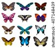 big collection butterfly of...
