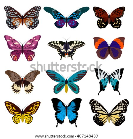 Big collection butterfly of colorful icon set. Art butterflies isolated on white. Vector illustration - stock vector