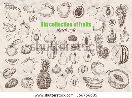 Big collection of fruits in sketch style. Vector  illustration for your design - stock vector