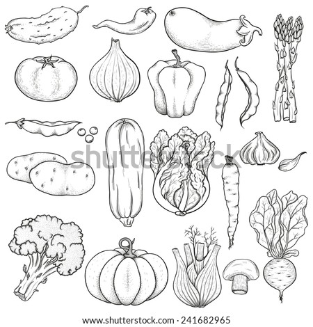 Big collection of hand drawn vegetables. Black on white background. Sketch. - stock vector