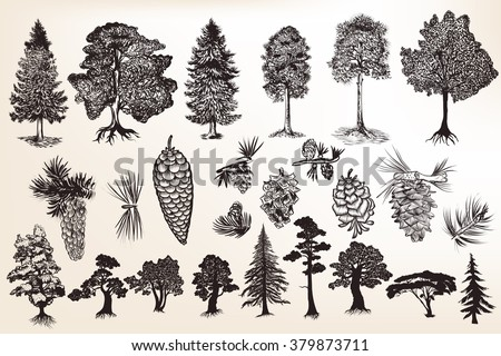 Big collection or set of hand drawn trees in engraved style - stock vector