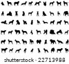 Big collection vector silhouettes of dogs with breeds description - stock vector