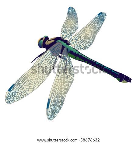Big dragonfly - stock vector