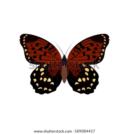 Big Colorful Butterflies Brown Butterflies Isolated Stock Vector ...