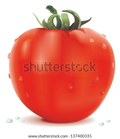Big Realistic red fresh tomato isolated on white background, food illustration - stock vector