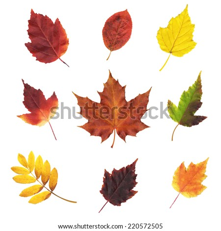 Big Set Leaves, Vector Illustration - stock vector