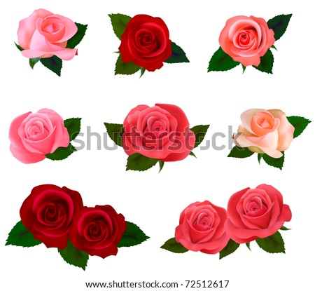 Big set of a beautiful colored roses. Vector illustration. - stock vector