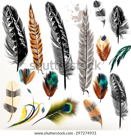 Big set of detailed bird feathers in realistic and engraved style - stock vector