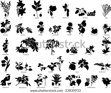 Big Set of Different Kind of Garden and Wild Berries and Flowers Silhouettes With Title of Name. High Detail, Very Smooth. Vector Illustration.