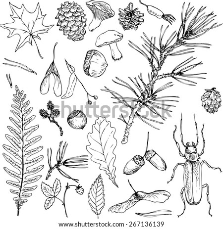 big set of ink drawing forest objects, seeds, leaves, twigs, pine cones, mushrooms, hand drawn vector elements, ink drawing sketch of nature objects - stock vector