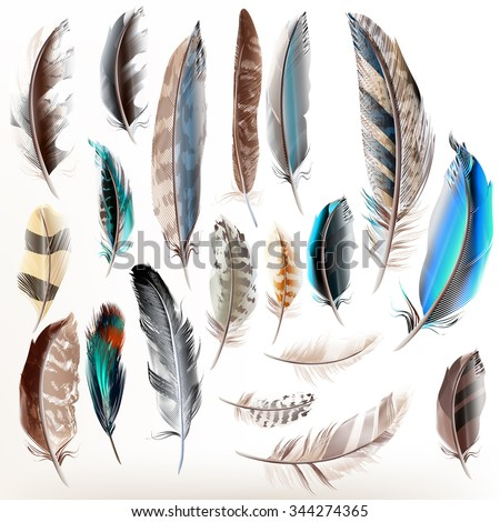 Big set or collection of detailed bird feathers in realistic style - stock vector