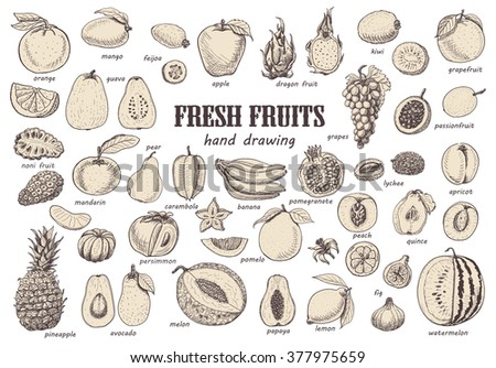 Big set with isolated fruits. Vector  illustration for your design - stock vector