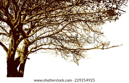 Big tree and branches silhouette. Detailed vector background - stock vector