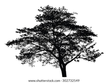 Big tree silhouette : vector