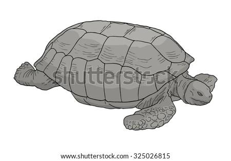 Big turtle - stock vector