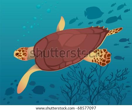 Big turtle in sea - stock vector