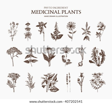 Big Vector Collection of hand drawn Spices and Herbs. Botanical plant illustration. Vintage Medicinal Herbs and Poisonous Plants sketch set isolated on white - stock vector