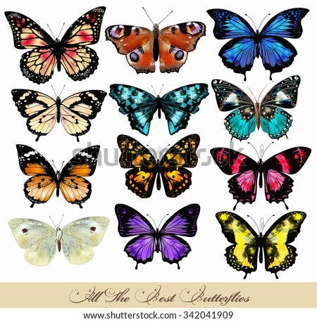 Big vector set or collection of realistic colorful butterflies for design - stock vector