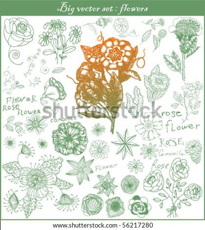 big vector set: swirls and flower - stock vector