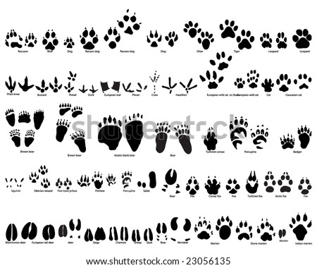 Biggest collection of animal and bird trails with name - stock vector