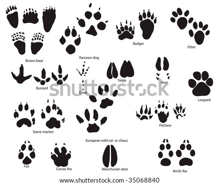 Biggest collection of animal and bird trails with title - stock vector
