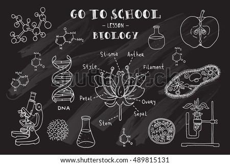 hand sketches on the theme of biology vector illustration chalkboard