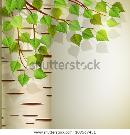 birch - stock vector