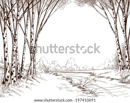 Birch tree forest, graphic background - stock vector