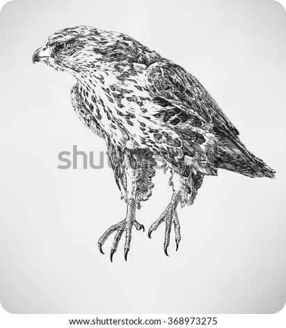 Bird falcon, hand drawing, vector illustration. - stock vector