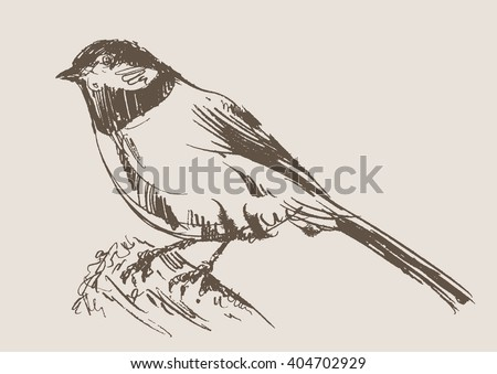 bird hand draw sketch, vector