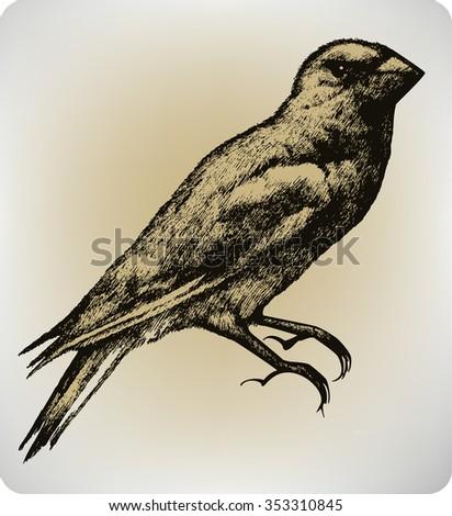 Bird, hand drawing, vector illustration. - stock vector