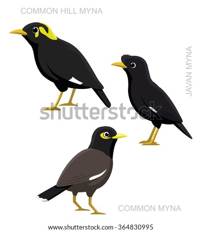 Myna Stock Images, Royalty-Free Images & Vectors ... - photo#15