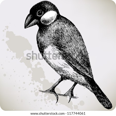 Bird Padda oryzivora, hand-drawing. Vector illustration.